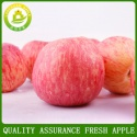 best prices apple fresh fruit fuji apple exporter in china - product's photo