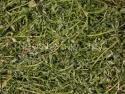 green alfalfa in pellets - product's photo