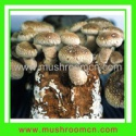 shiitake substrate - product's photo