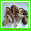 shiitake seeds - product's photo