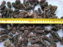 special grade morels - product's photo