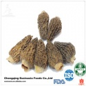 dried morchella esculenta - product's photo