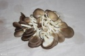 oyster mushroom in china - product's photo