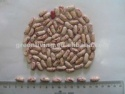 purple speckled kidney bean - product's photo