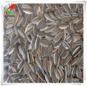 sunflower seeds type5009  - product's photo
