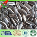 chinese 5009 sunflower seed - product's photo