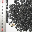 black beans specifications - product's photo