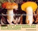 dried boletus luteus - product's photo