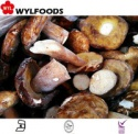 frozen iqf boletus edulis - product's photo