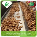 shandong organic ginger - product's photo
