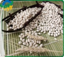 white kidney beans (navy type) - product's photo