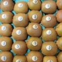 supply fresh kiwi fruits - product's photo