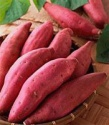 fresh sweet potatoes - product's photo