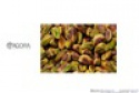 roasted pistachio kernels - product's photo