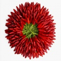 chili wholesale price - product's photo