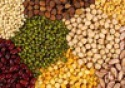 all kind of indian pulses exporters - product's photo