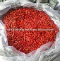 vietnam dried chili - product's photo
