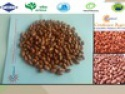 bulk peanuts in shell - product's photo