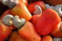 raw cashew nuts - product's photo