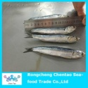 fresh anchovies that can be made caned anchovies and also can be raw salted anchvoies - product's photo