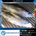 sashimi grade a fresh yellow fin tuna - product's photo