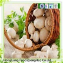 fresh white button mushroom - product's photo
