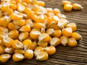feed grade yellow corn  - product's photo