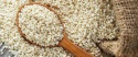 hulled sesame seeds - product's photo
