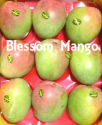 fresh mango r2e2 - product's photo