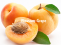 australia fresh apricot - product's photo
