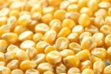 yellow corn for animal or human consumption - product's photo