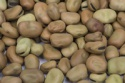 high quality broad beans - product's photo