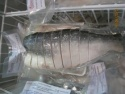 fresh pangasius fish of alo seafood co., - product's photo
