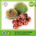 good chinese fresh chestnut - product's photo