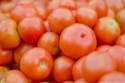 fresh indian tomatoes/tomatoes - product's photo