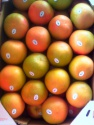 grapefruits - product's photo