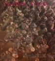 china high quality shiitake mushroom growing kits - product's photo