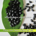 new crop small black kidney beans - product's photo