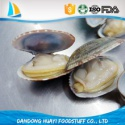 high quality frozen short necked clam - product's photo