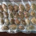 new season frozen vacuum packed cooked short necked clam - product's photo