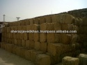 wheat straw bales - product's photo