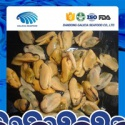 iqf fresh frozen mussel meat with high quality - product's photo