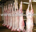 halal fresh/frozen sheep/goat/lamb meat/carcass - product's photo