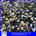 frozen mussels half shell - product's photo