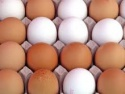 brown and white chicken eggs - product's photo