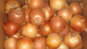 yellow onion - product's photo