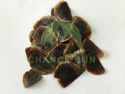 high quality raw sea shell sea oyster shells operculum - product's photo