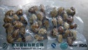 new frozen fresh cooked clam products in high quality - product's photo
