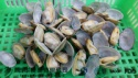 frozen hot seling cooked nature taste clam products - product's photo