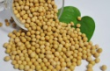 non gmo soybean seed - product's photo